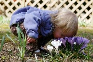 childflowers